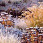 trvalky v zime